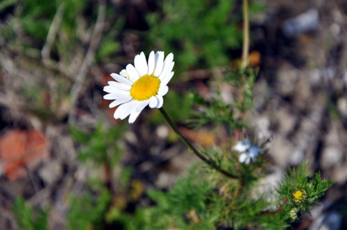 un flor de primavera