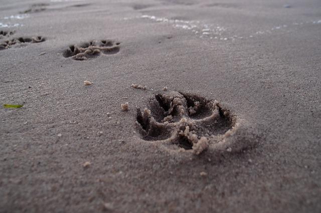 platja per a gossos - La Torre de Barcelona